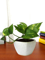 Good Luck Air Purifying Money Plant in White Heart Ceramic Pot