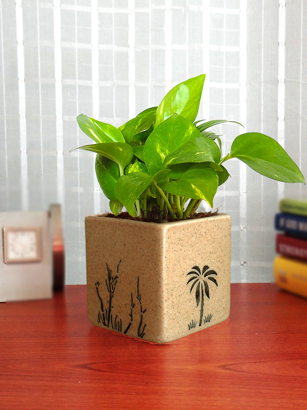 Good Luck Money Plant in Brown Square Aroez Ceramic Pot