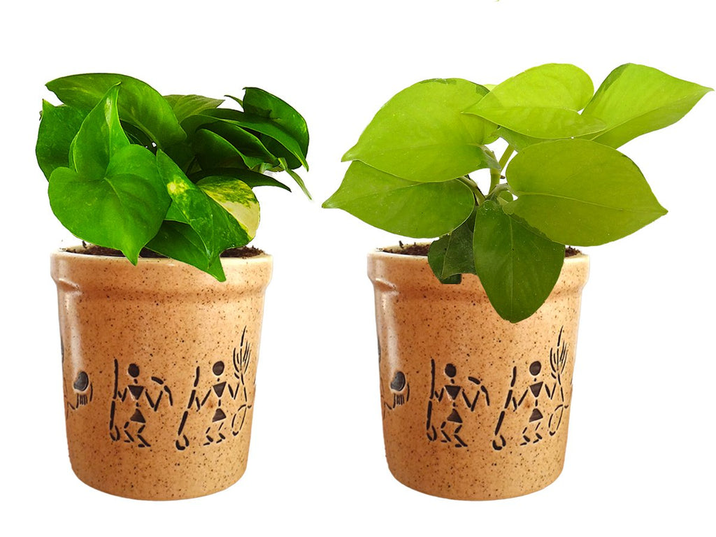 Combo Of Good Luck Air Purifying Live Money Plant and Golden Money Plant in Brown Jar Aroez Ceramic Pot