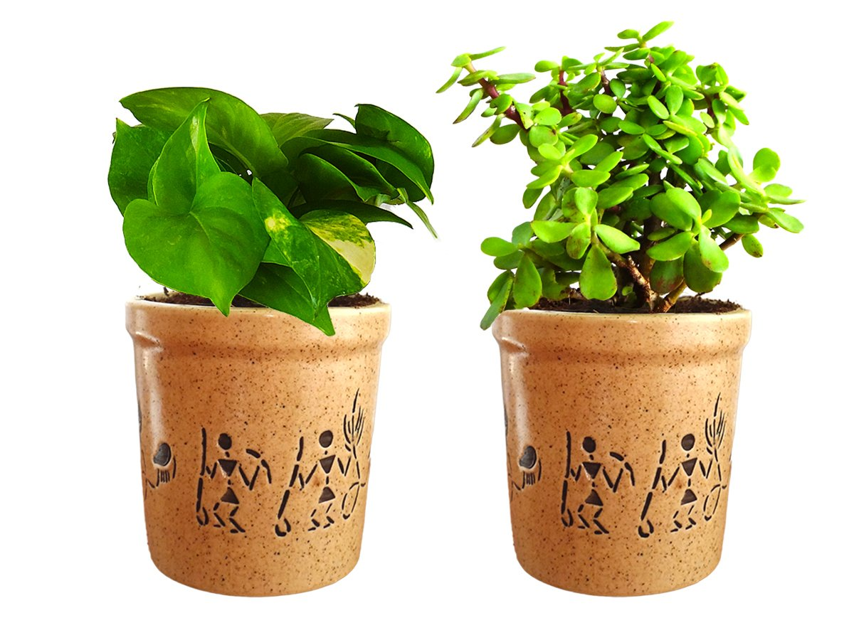 Combo Of Good Luck Live Money Plant and Jade Plant in Brown Jar Aroez Ceramic Pot