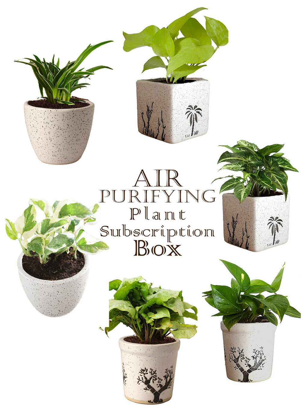 Air Purifying Plant Subscription Box in White Ceramic Pots