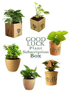 Good Luck Plant Subscription Box in Brown Pots