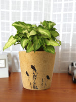 Good Luck Air Purifying Live Green Syngonium Plant in Brown Bucket Aroez Ceramic Pot