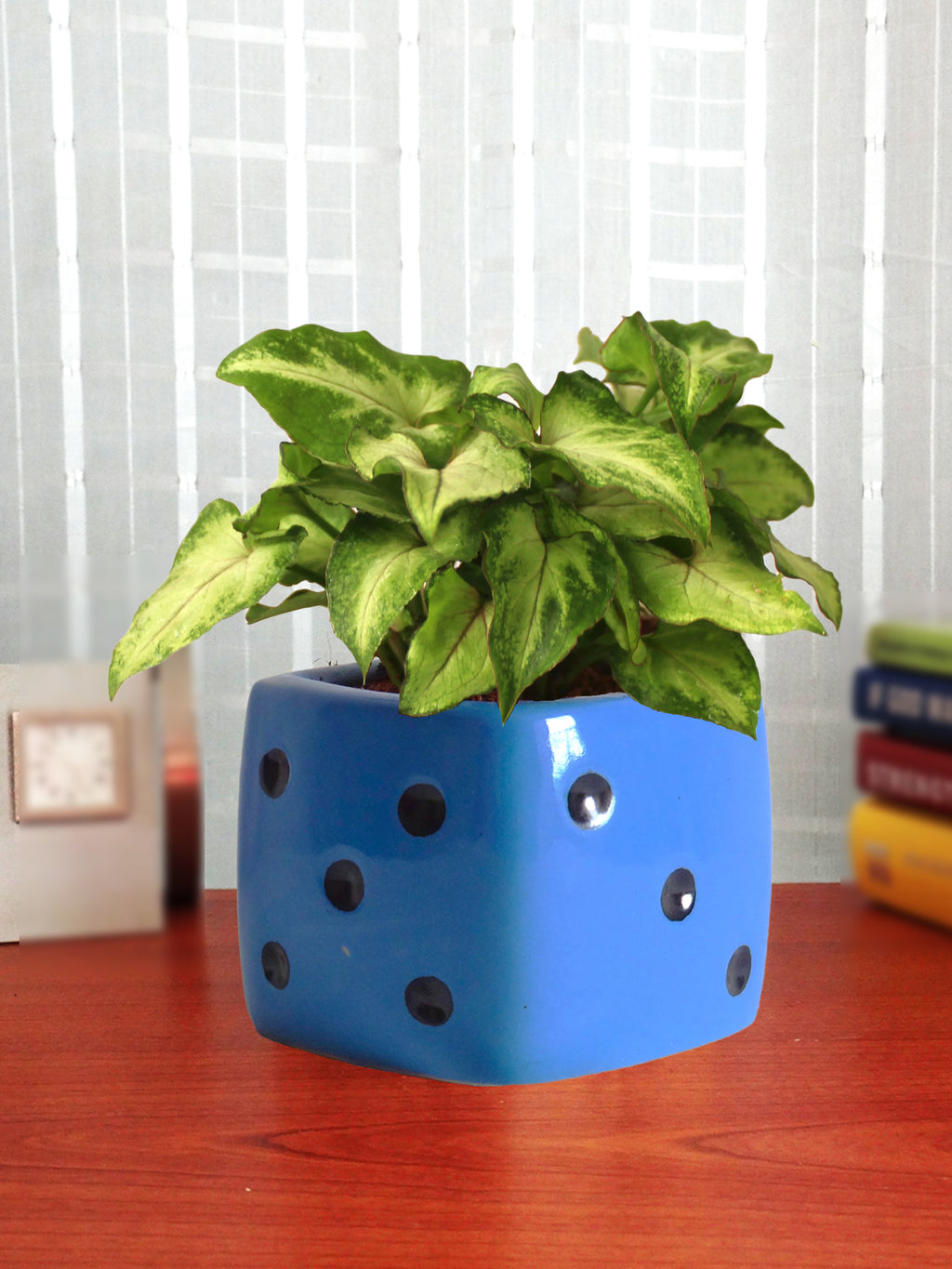 Good Luck Air Purifying Green Syngonium Plant In Blue Dice Ceramic Pot