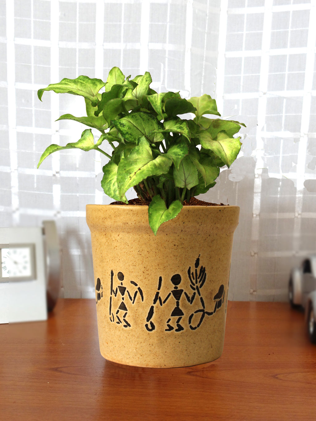 Good Luck Air Purifying Live Green Syngonium Plant in Brown Jar Aroez Ceramic Pot