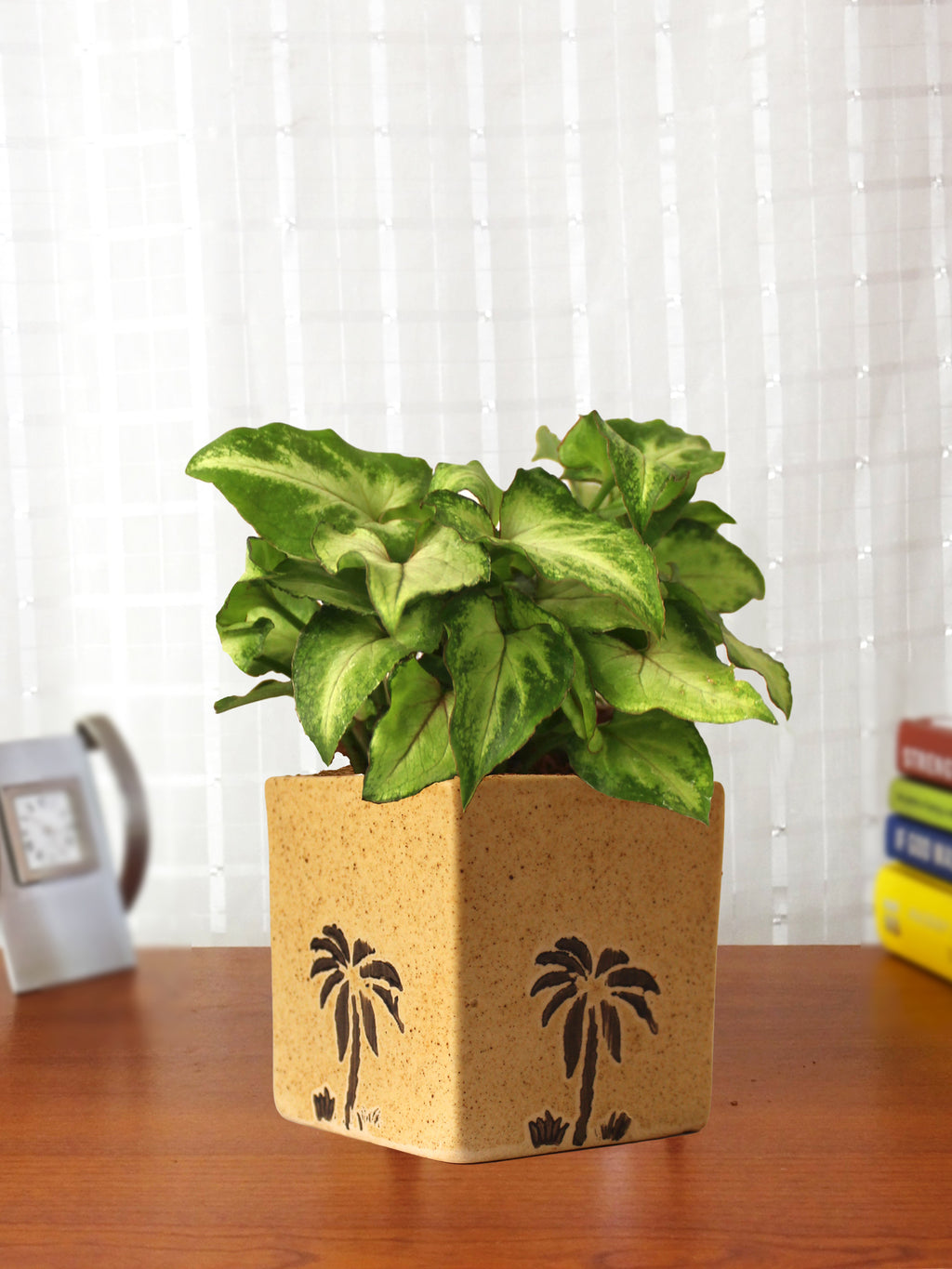Good Luck Air Purifying Live Green Syngonium Plant in Brown Square Aroez Ceramic Pot