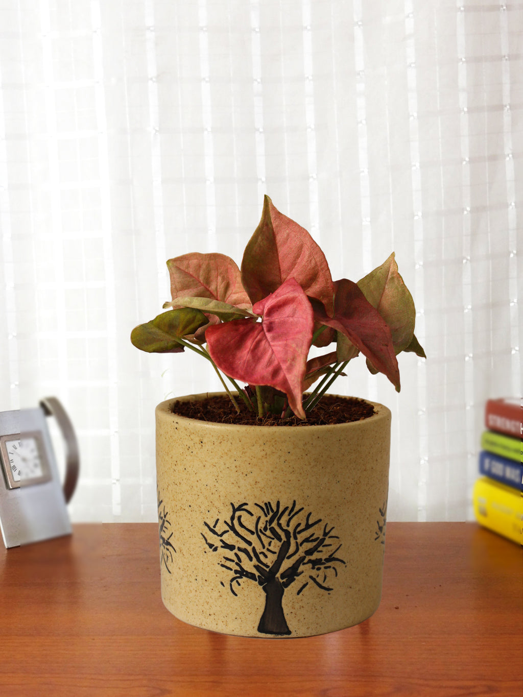 Good Luck Pink Syngonium Plant in Brown Barrel Aroez Ceramic Pot
