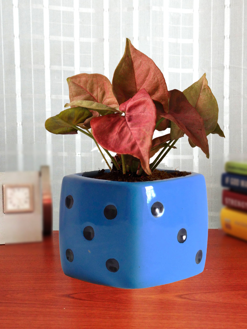 Good Luck Air Purifying Pink Syngonium Plant In Blue Dice Ceramic Pot