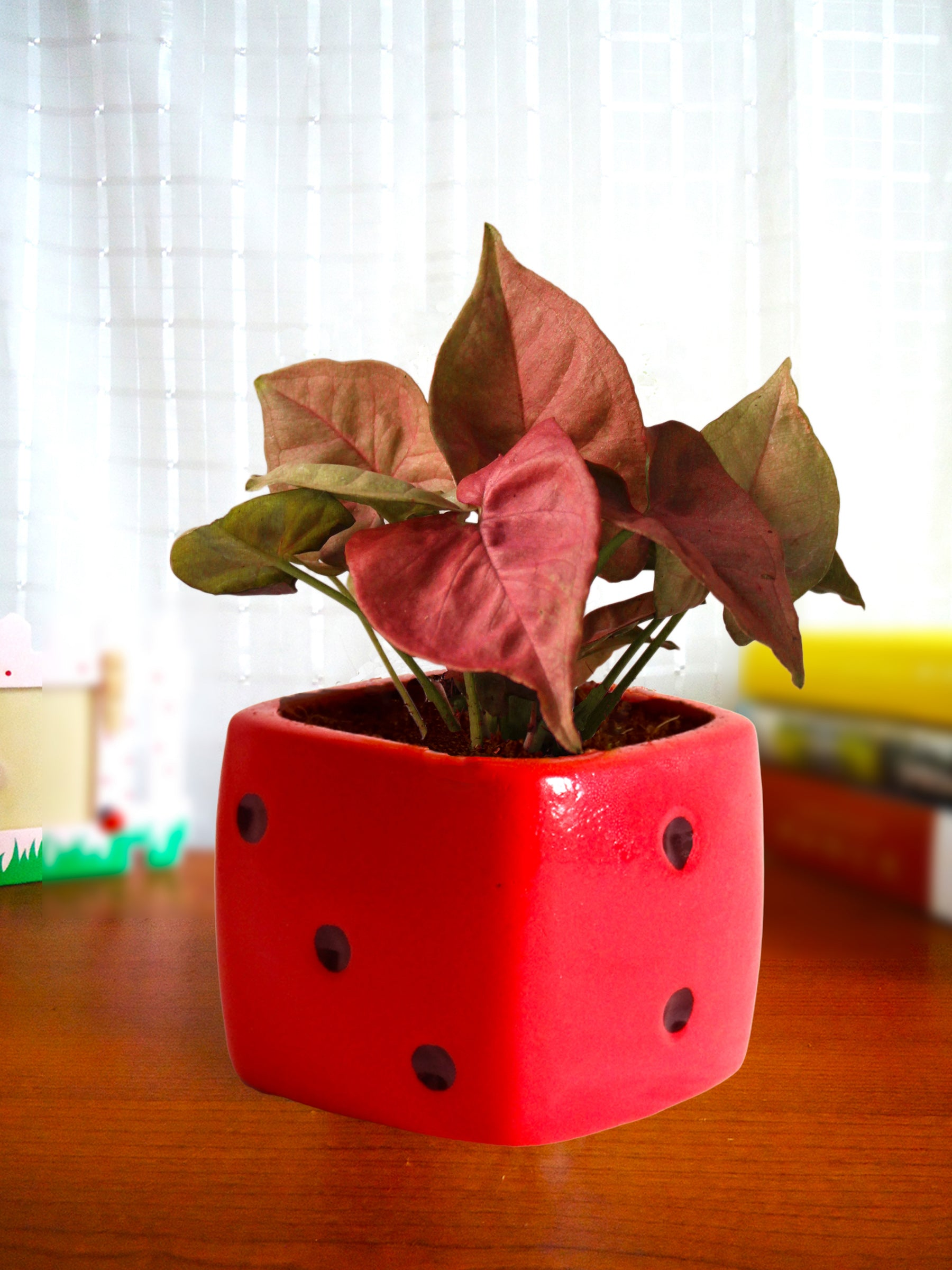 Good Luck Air Purifying Pink Syngonium Plant in Red Dice Ceramic Pot