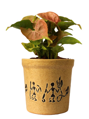 Good Luck Air Purifying Live Pink Syngonium Plant in Brown Jar Aroez Ceramic Pot