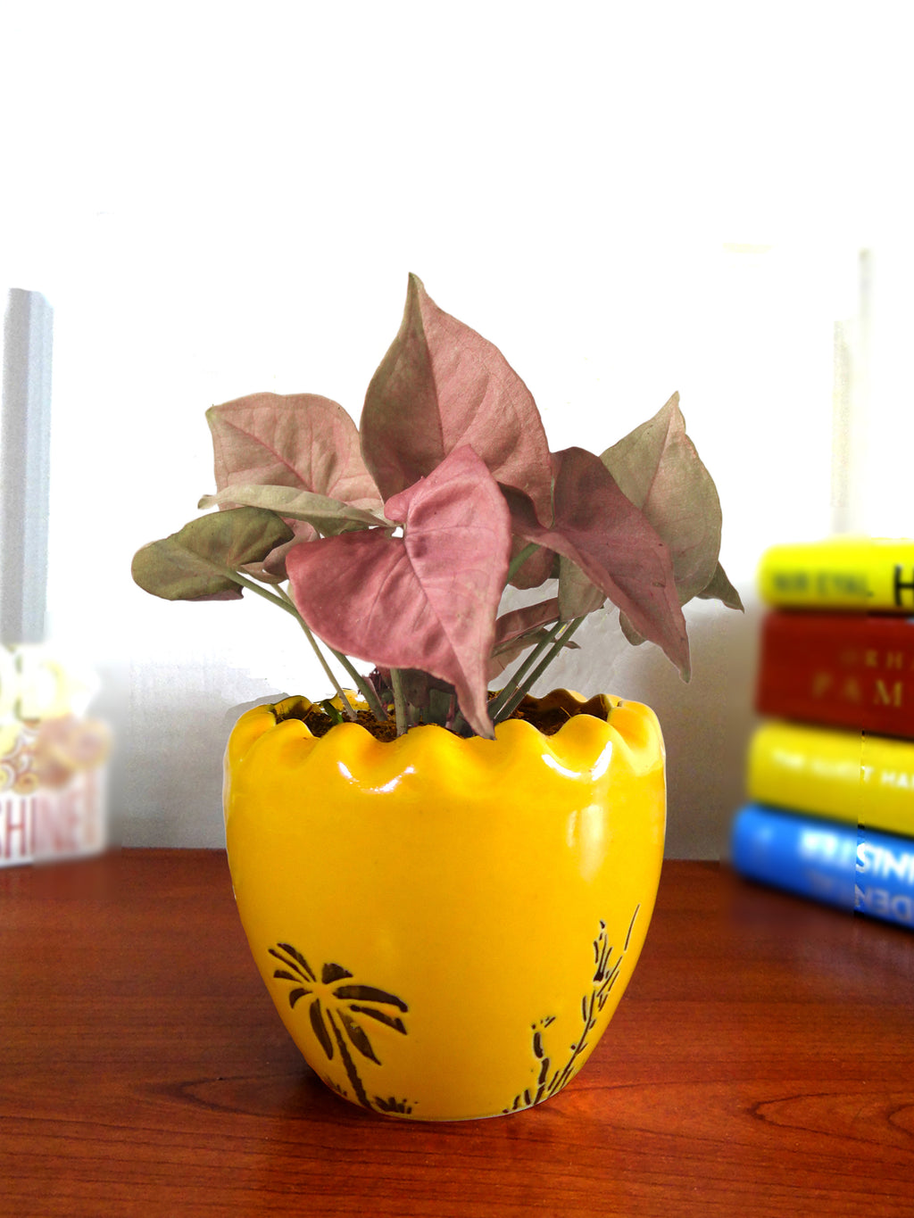 Good Luck Air Purifying Live Pink Syngonium Plant in Yellow Ruffel Aroez Ceramic Pot