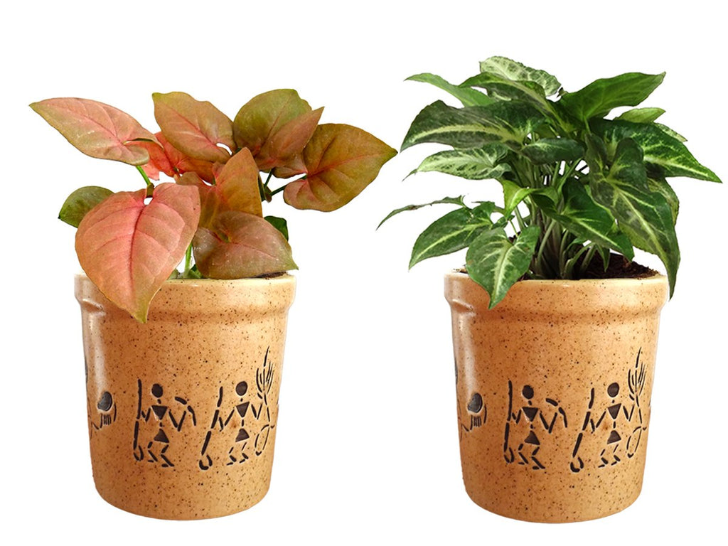 Combo Of Good Luck Air Purifying Live Syngonium Pink and Syngonium Green Plant in Brown Jar Aroez Ceramic Pot