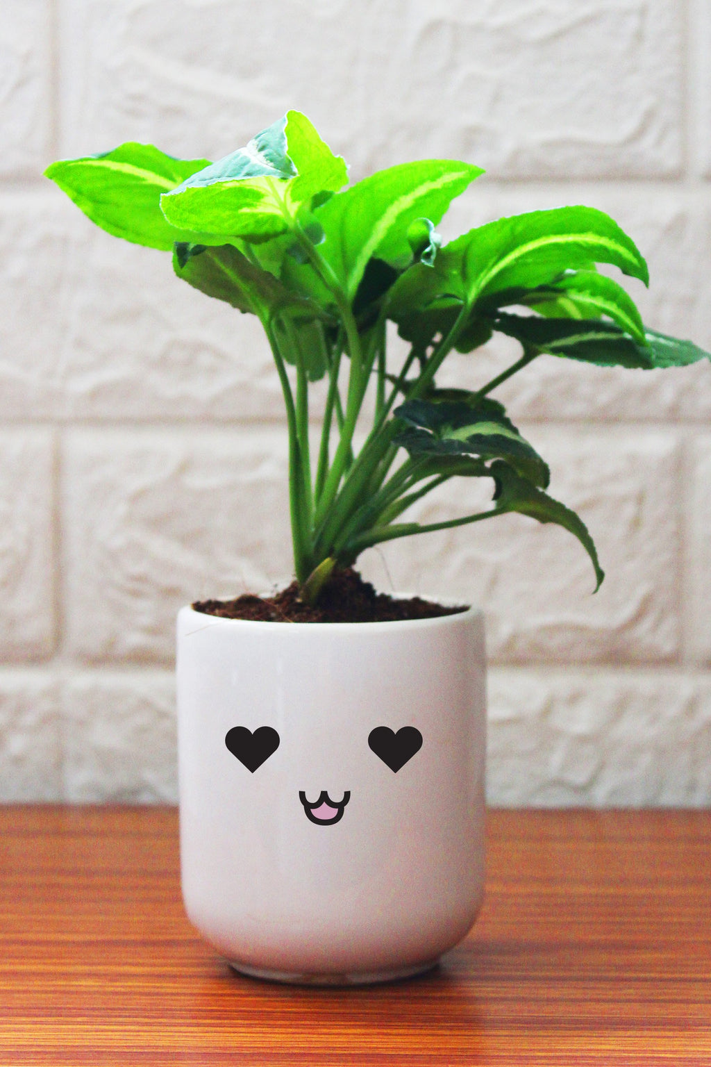Syngonium Plants in ceramic pots