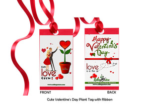 Valentine's Day Combo of Good Luck Air Purifying Money Plants Duet in Red Heart Ceramic Pot