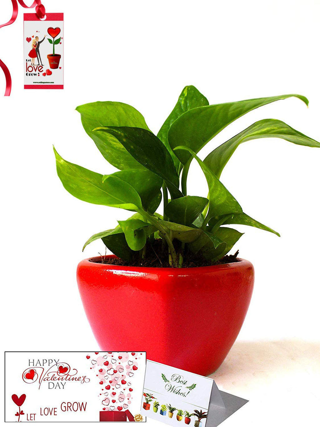 Valentine's Day Combo of Good Luck Air Purifying Money Plant in Red Heart Ceramic Pot