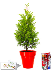 Rolling Nature Christmas Tree Combo in Red Colorista Pot with Decorative Accessories