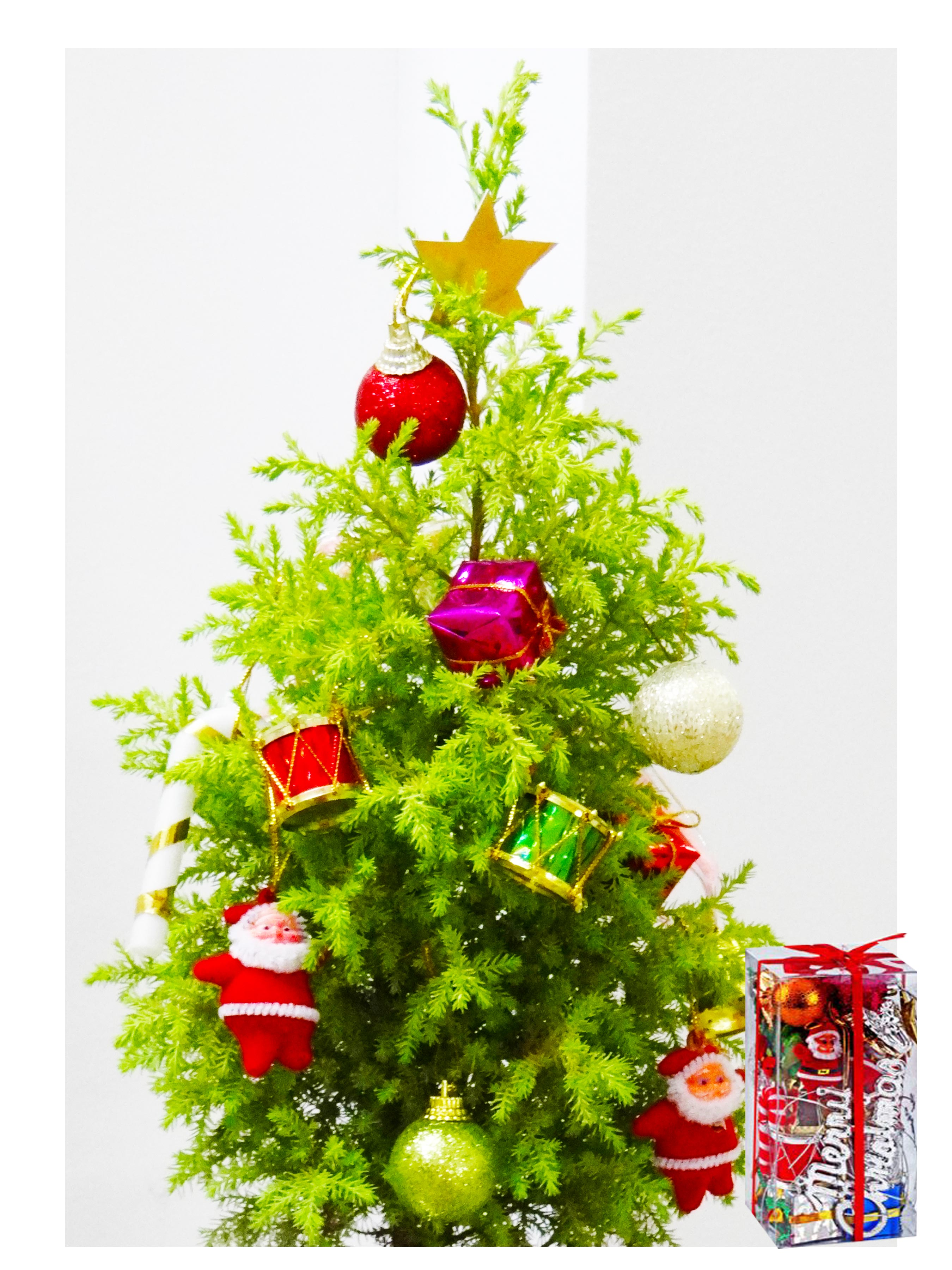 Rolling Nature Christmas Tree Combo in Green Colorista Pot with Decorative Accessories