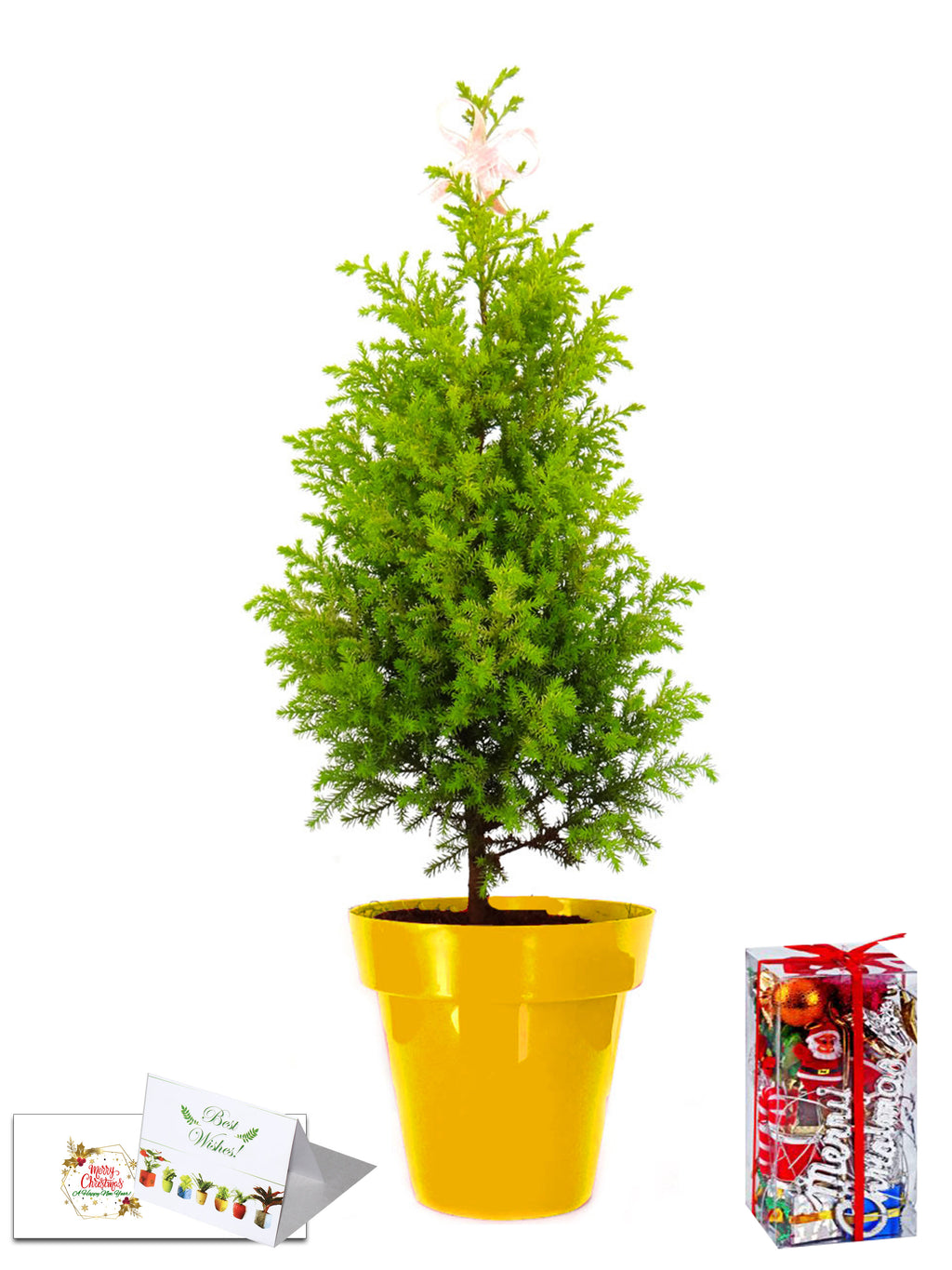 Rolling Nature Christmas Tree Combo in Yellow Colorista Pot with Decorative Accessories