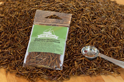 BBQ roasted mealworms 2g bags
