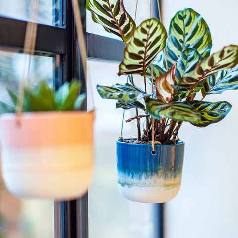Mojave Glaze Blue Hanging Planter