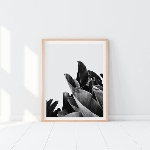 Banana Leaves Art Print In Black And White
