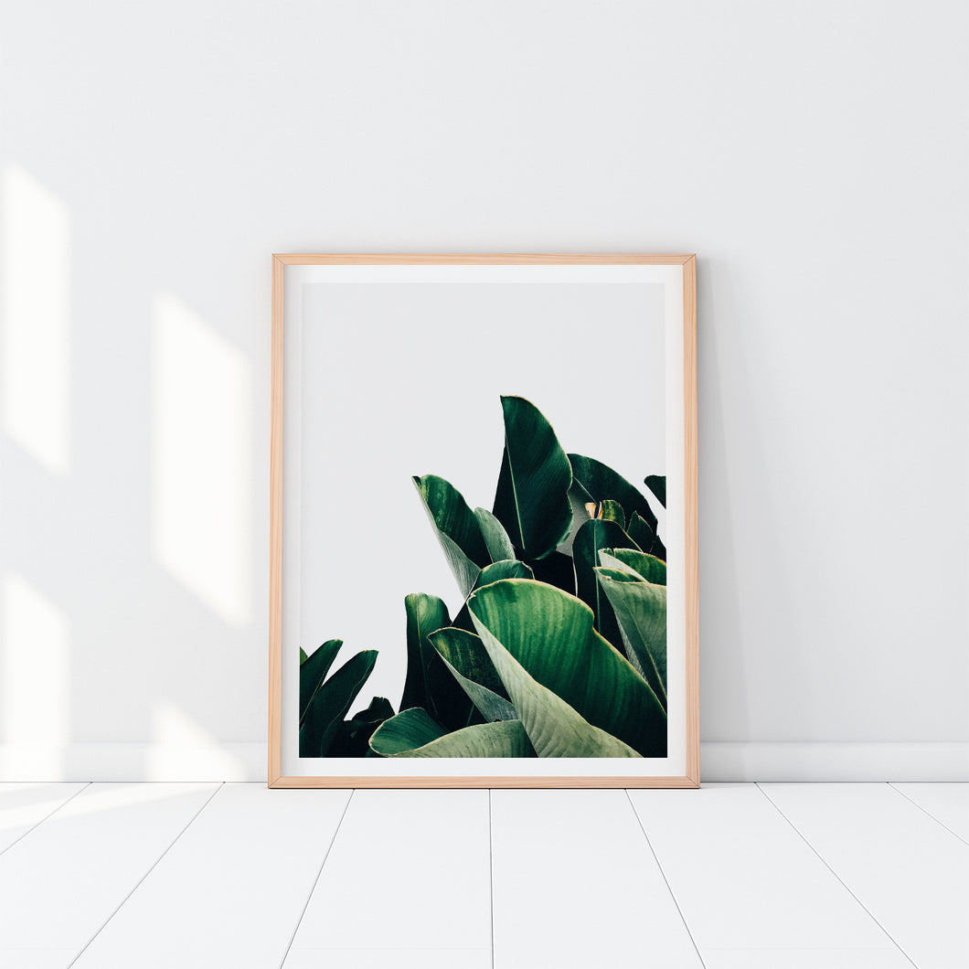 Banana Leaves Art Print In Frame
