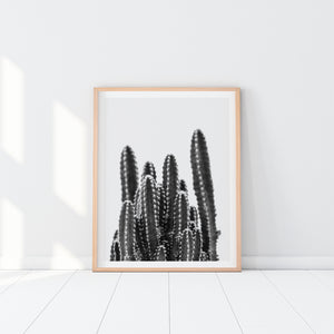 Black And White Cactus Art Print In Frame