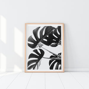 Black And White Monstera Leaves Art Print In Frame