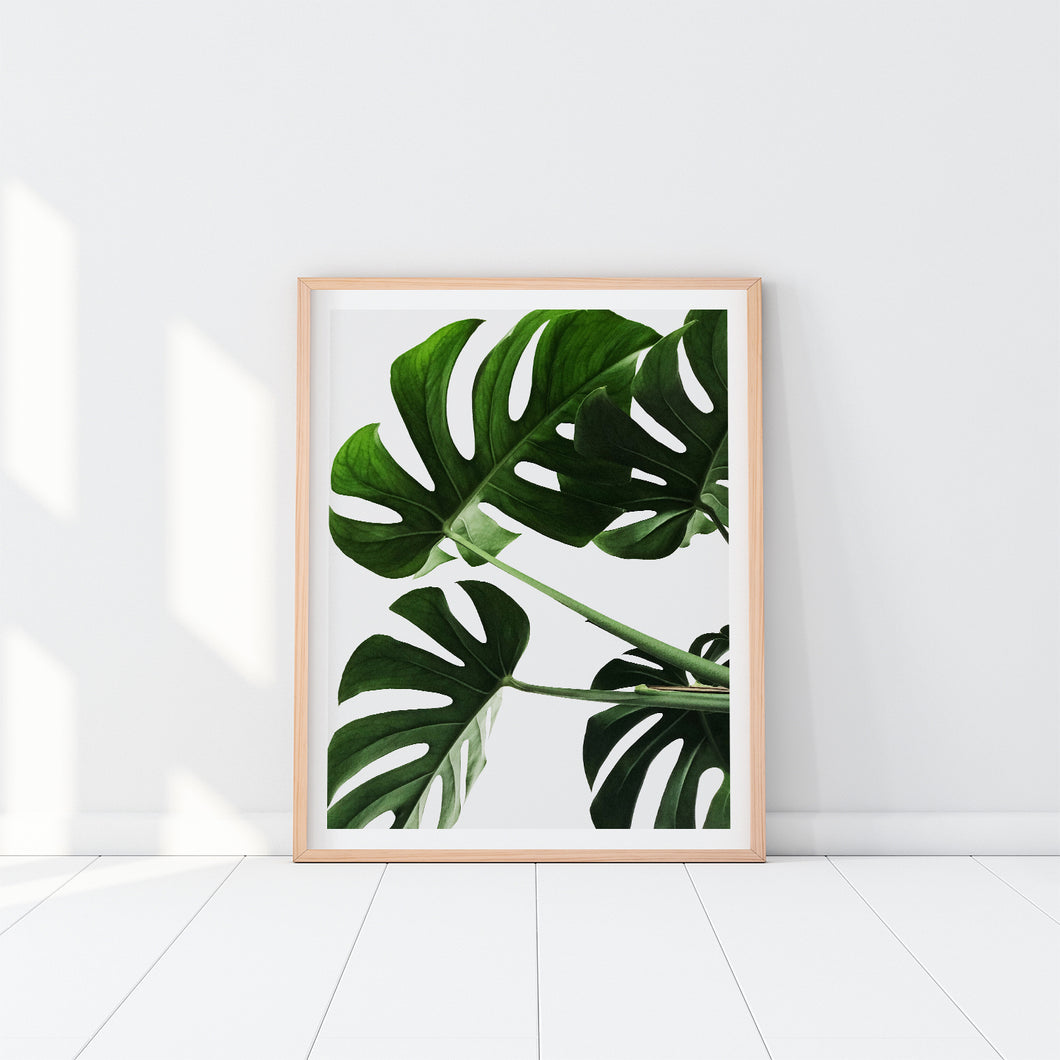 Monstera Leaves Art Print In Frame