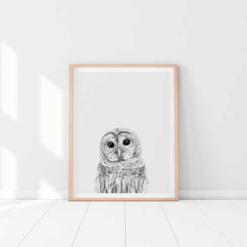 Black and White Framed Owl Art Print