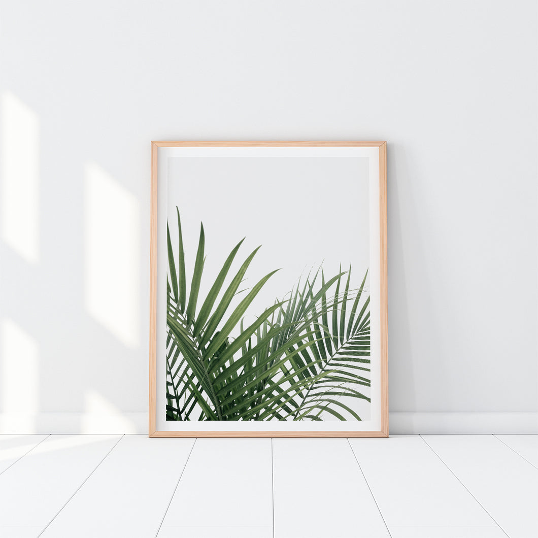 Palm Leaves Art Print In Frame
