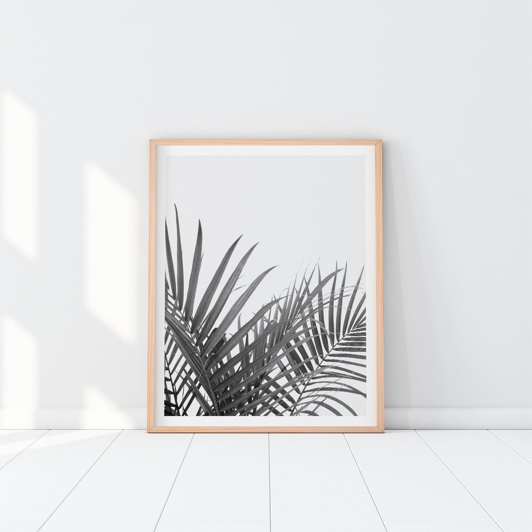 Black And White Palm Leaves Art Print In Frame