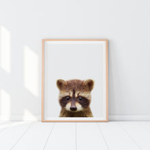 Framed Racoon Art Print
