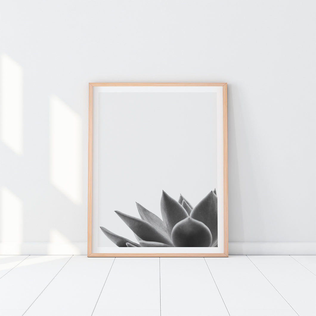 Black And White Succulent Art Print In Frame