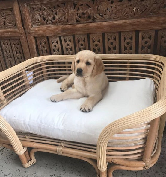Large Rattan Dog Bed