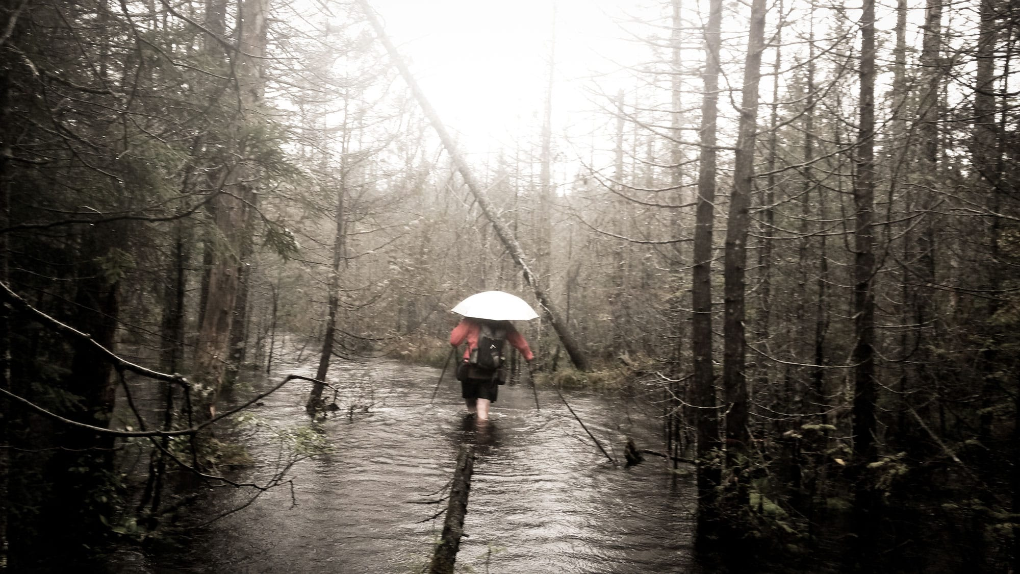 Dampish conditions in New York's Adirondack Mountains | October, 2015