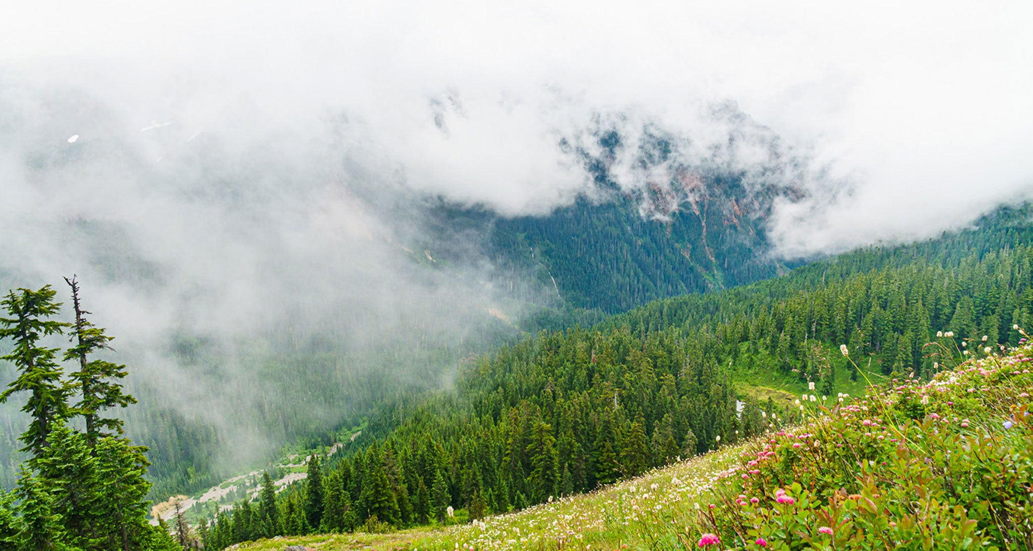 Featureless grey base of nimbostratus producing an all day rain in the Glacier Peak Wilderness in the Washington Cascades.