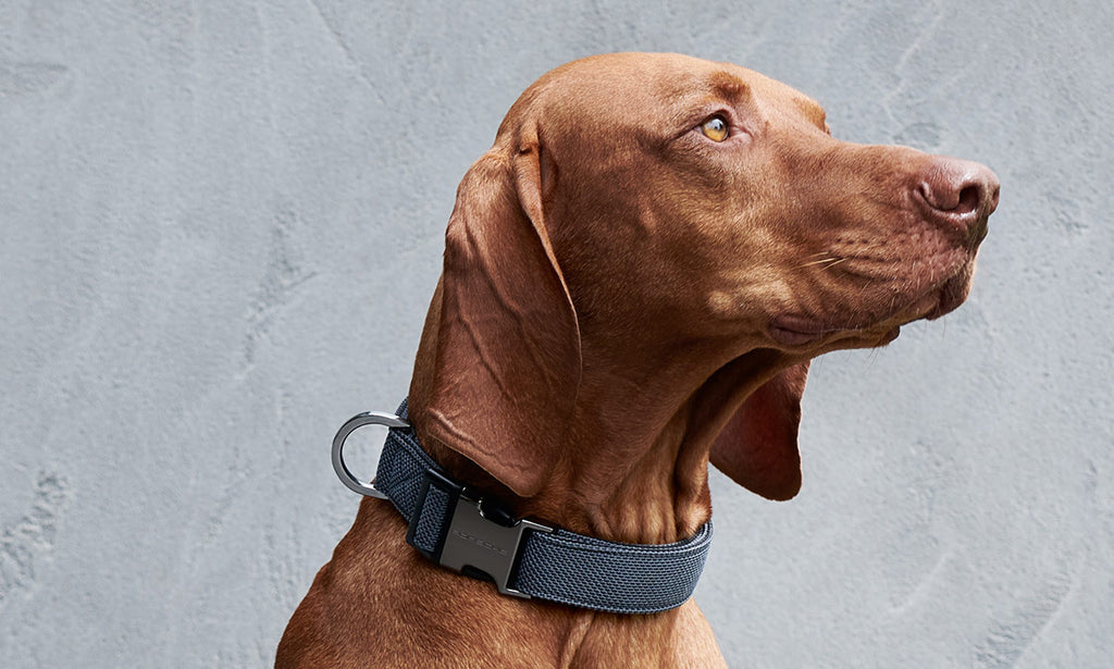 Porsche Driver's Selection Dog Collar- Porsche Pets