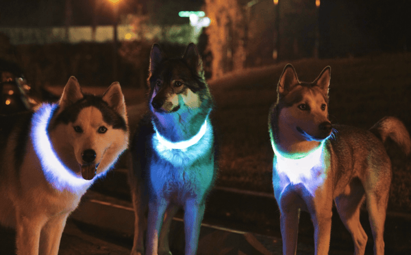 Collars Safety LED Dog Collar