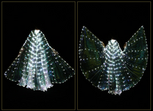 Iridescent White LED Butterfly Wings (300 Lights, Batteries Not Included)