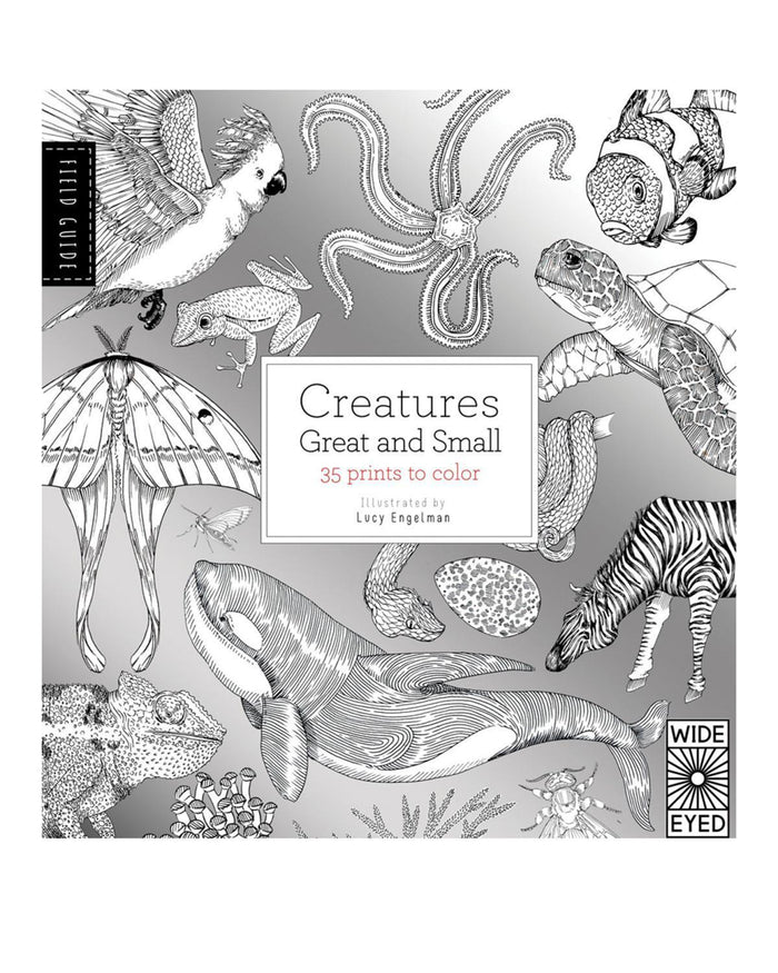Little quarto publishing group play Field Guide: Creatures Great and Small: 35 prints to color