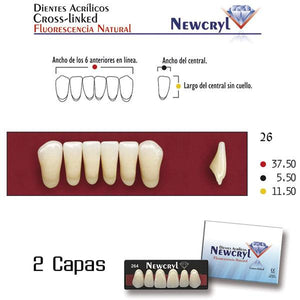 dientes NEW STETIC, dientes newcryl-vita 26 lo a1