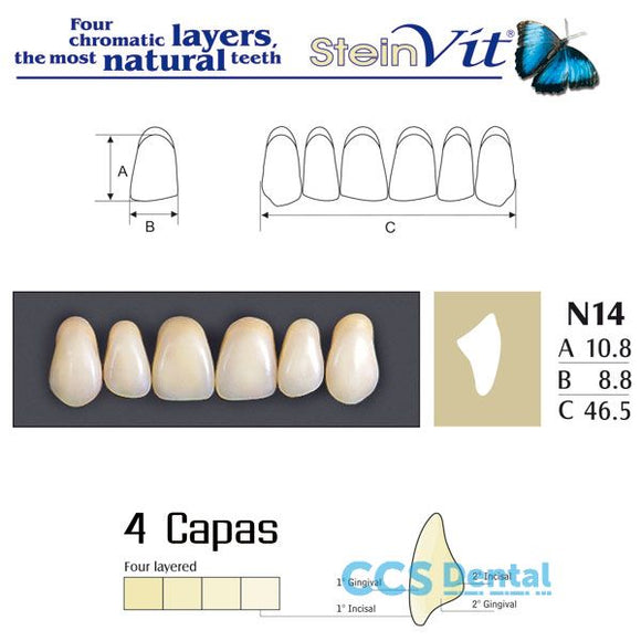dientes NEW STETIC, dientes steinvit n14 up