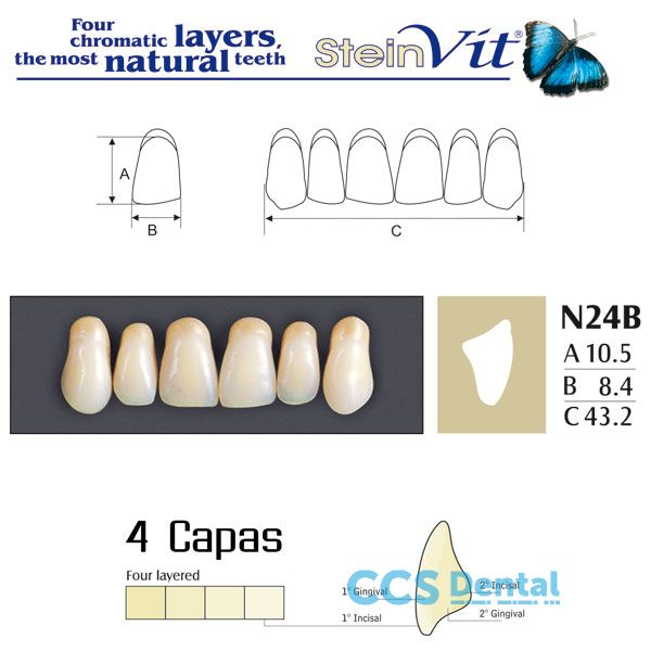 dientes NEW STETIC, dientes steinvit n24b up