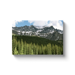 Banff Forest - photodecor.net