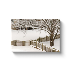 Backyard Winter Beauty - photodecor.net