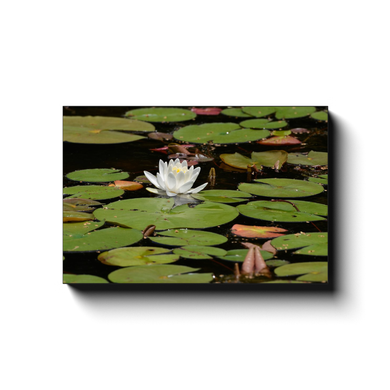 Floating Lily - photodecor.net