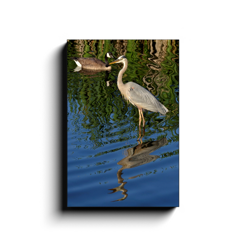 Waterfowl Reflections - photodecor.net