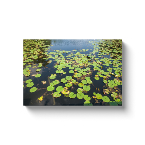 Aquatic Garden - photodecor.net