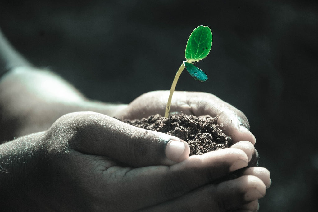 Living Soil is the New Gold Standard